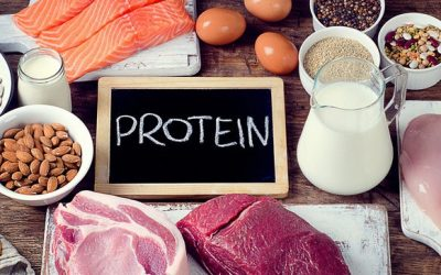 How Protein can help you Lose Weight..